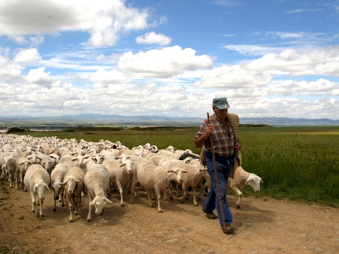 Shepherd and his flock near Santo Domingo de la Calzada
