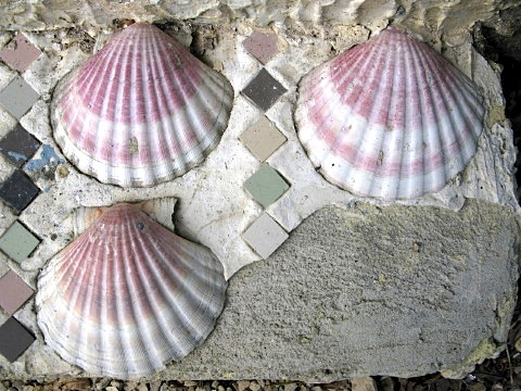 St Jacques scallops on a door step