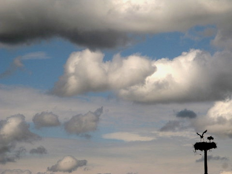 Storks and clouds