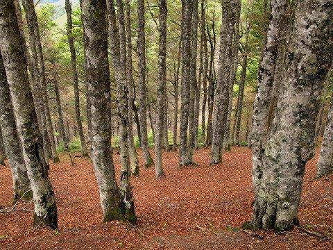 Woodland descending towards Roncesvalles