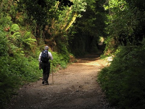 A pilgrim on the Camino