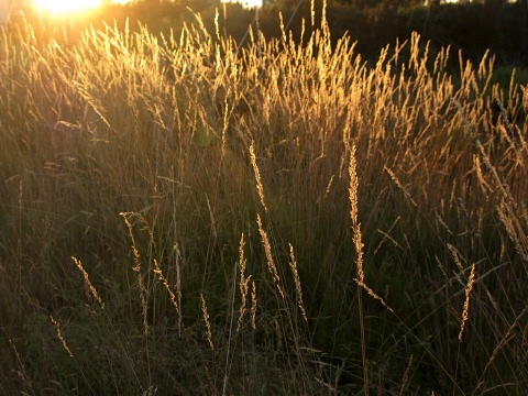 Grass lands at sunset
