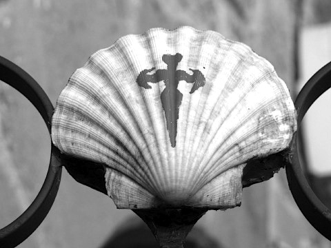 The scallop of Saint James