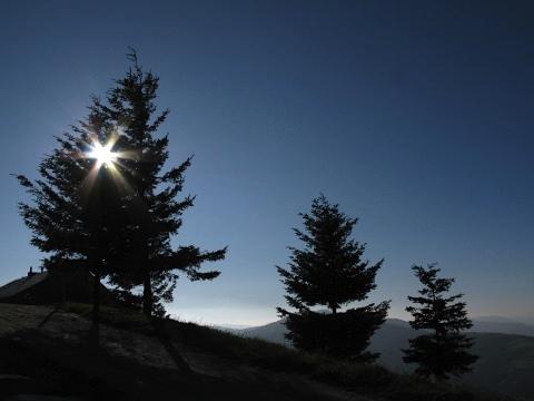 Trees and sun in O Cebreiro